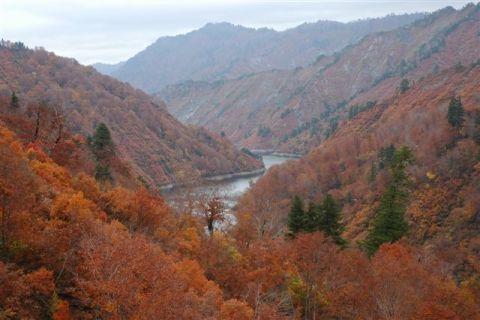 樹間の只見湖・240[1].JPG